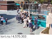 Купить «Посетители у аквариума с морскими львами и котиками в зоопарке Уэно, Токио, Япония», фото № 4570303, снято 9 апреля 2013 г. (c) Кекяляйнен Андрей / Фотобанк Лори