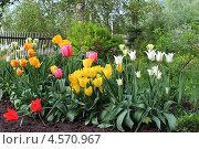 Цветочный дворик. Стоковое фото, фотограф Елена Алексеенко / Фотобанк Лори