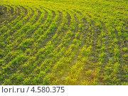 Весеннее поле. Стоковое фото, фотограф Иван Носов / Фотобанк Лори