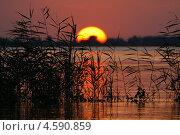 Колыбель солнца. Закат в камышах. Стоковое фото, фотограф Алексей Лугинин / Фотобанк Лори