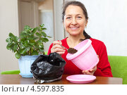 Женщина пересаживает в горшок цветок каланхое. Стоковое фото, фотограф Яков Филимонов / Фотобанк Лори