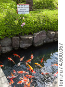 Купить «Пруд с разноцветными карпами на территории Senso-ji shrine, Asakusa, Япония», фото № 4600067, снято 10 апреля 2013 г. (c) Кекяляйнен Андрей / Фотобанк Лори