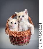 Купить «Два маленьких красных котенка в корзине», фото № 4605251, снято 8 мая 2013 г. (c) Типляшина Евгения / Фотобанк Лори