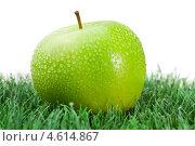 Купить «Зеленое яблоко с каплями влаги на траве», фото № 4614867, снято 9 марта 2011 г. (c) Wavebreak Media / Фотобанк Лори