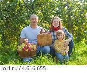 Купить «Счастливая семья с урожаем яблок в саду», фото № 4616655, снято 12 сентября 2012 г. (c) Яков Филимонов / Фотобанк Лори