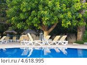 Фикусовое дерево у бассейна. Стоковое фото, фотограф Барабанов Максим / Фотобанк Лори