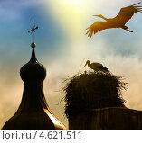 Купить «Гнездо аистов на фоне церкви», фото № 4621511, снято 11 июня 2012 г. (c) photoff / Фотобанк Лори
