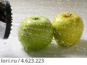 Купить «Мытье яблок», фото № 4623223, снято 31 июля 2008 г. (c) Иван Михайлов / Фотобанк Лори