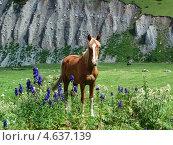 Лошадь в горной долине. Стоковое фото, фотограф Константин Нарыков / Фотобанк Лори