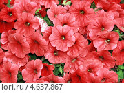 Цветы. Стоковое фото, фотограф Дмитрий Сушкин / Фотобанк Лори