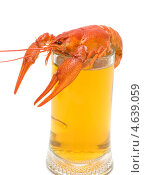 Купить «Вареный рак и кружка с пивом», фото № 4639059, снято 17 июня 2012 г. (c) Ласточкин Евгений / Фотобанк Лори