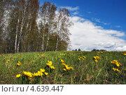 Купить «Адонис сибирский на опушке леса», эксклюзивное фото № 4639447, снято 8 марта 2012 г. (c) Евгений Мухортов / Фотобанк Лори