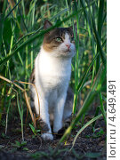Кот в саду. Стоковое фото, фотограф Ксения Козырь / Фотобанк Лори
