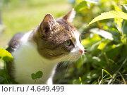 Кот в траве. Стоковое фото, фотограф Ксения Козырь / Фотобанк Лори