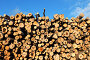 Заготовка древесины, фото № 4650003, снято 12 июня 2012 г. (c) Galina Barbieri / Фотобанк Лори