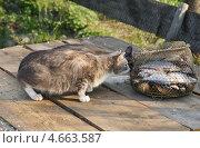 Купить «Кошки интересуются уловом», эксклюзивное фото № 4663587, снято 12 мая 2013 г. (c) Dmitry29 / Фотобанк Лори