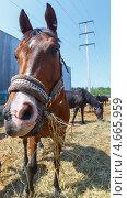 Купить «Конь», фото № 4665959, снято 18 мая 2013 г. (c) Андрей Жухевич / Фотобанк Лори