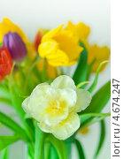 Купить «Тюльпаны в букете», фото № 4674247, снято 13 марта 2013 г. (c) Сурикова Ирина / Фотобанк Лори
