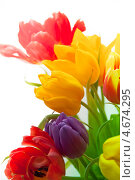 Купить «Букет разноцветных тюльпанов», фото № 4674295, снято 13 марта 2013 г. (c) Сурикова Ирина / Фотобанк Лори
