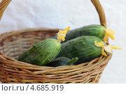 Купить «Огурцы в корзинке», фото № 4685919, снято 31 мая 2013 г. (c) Иван Черненко / Фотобанк Лори