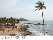 Высокая пальма на берегу аравийского моря. Индия, штат Гоа. Север. (2013 год). Стоковое фото, фотограф Александр Овчинников / Фотобанк Лори