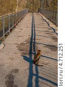 Кот сидящий на середине моста. Стоковое фото, фотограф Павел Ходыревский / Фотобанк Лори