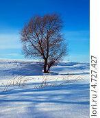 Купить «Одинокое дерево зимой», фото № 4727427, снято 11 марта 2012 г. (c) Яков Филимонов / Фотобанк Лори
