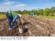 Купить «Уборка урожая картофеля», фото № 4729707, снято 19 марта 2019 г. (c) FotograFF / Фотобанк Лори