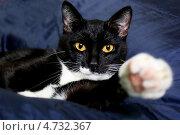 Чёрный кот. Стоковое фото, фотограф Анастасия Кунденкова / Фотобанк Лори