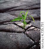 Зеленый росток в черной потрескавшейся земле. Стоковое фото, фотограф Дмитрий Лифанов / Фотобанк Лори