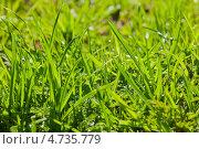 Свежая зеленая трава. Стоковое фото, фотограф Дмитрий Лифанов / Фотобанк Лори