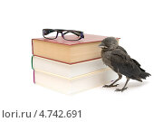 Купить «Птенец галки и книги на белом фоне», фото № 4742691, снято 10 июня 2013 г. (c) Ласточкин Евгений / Фотобанк Лори