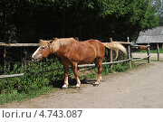 Купить «Конный двор в Национальном парке «Лосиный остров», Москва», эксклюзивное фото № 4743087, снято 1 августа 2012 г. (c) lana1501 / Фотобанк Лори