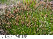 Луговая трава. Стоковое фото, фотограф Александр Онучин / Фотобанк Лори