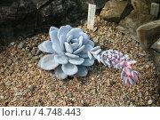 Кактусы в Ботаническом саду. Стоковое фото, фотограф Влад ЩЧ / Фотобанк Лори