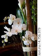 Композиция с белыми орхидеями и каллами. Стоковое фото, фотограф Slava Pozdnyakov / Фотобанк Лори