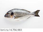 Рыба вобла. Стоковое фото, фотограф Slava Pozdnyakov / Фотобанк Лори