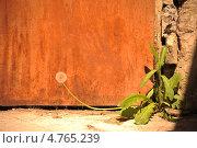 Одуванчик у стены. Стоковое фото, фотограф Виктория Кныш / Фотобанк Лори