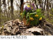 Корзинка с цветами в лесу. Стоковое фото, фотограф Данько Екатерина / Фотобанк Лори