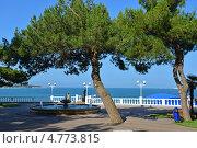 Купить «Ландшафтный дизайн набережной Геленджика», эксклюзивное фото № 4773815, снято 19 июня 2013 г. (c) Игорь Архипов / Фотобанк Лори