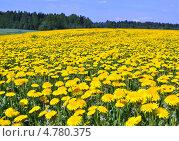 Купить «Холм одуванчиков», фото № 4780375, снято 18 мая 2013 г. (c) Сергей Великанов / Фотобанк Лори