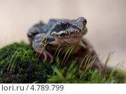 Лягушка. Стоковое фото, фотограф Алексей Свирин / Фотобанк Лори
