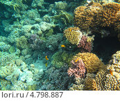 Купить «Рыбки красного моря», фото № 4798887, снято 12 июня 2013 г. (c) Робул Дмитрий / Фотобанк Лори