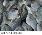 Рыба дорада на рынке Марселя (2009 год). Стоковое фото, фотограф Александр Элеазер / Фотобанк Лори