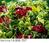 Купить «Свежие листья салата», фото № 4806707, снято 18 июля 2019 г. (c) Food And Drink Photos / Фотобанк Лори