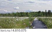 Проход к реке в болотистой местности, видеоролик № 4810075, снято 29 июня 2013 г. (c) Кекяляйнен Андрей / Фотобанк Лори