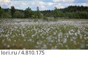Карельский пейзаж, видеоролик № 4810175, снято 29 июня 2013 г. (c) Кекяляйнен Андрей / Фотобанк Лори