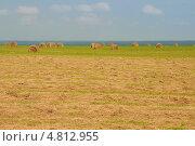 Стога сена в поле. Стоковое фото, фотограф Юрий Морозов / Фотобанк Лори