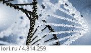Купить «Геном человека. Молекула дезоксирибонуклеиновой кислоты», фото № 4814259, снято 22 октября 2019 г. (c) Sergey Nivens / Фотобанк Лори