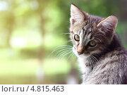 Котенок обернулся. Стоковое фото, фотограф Анастасия Кунденкова / Фотобанк Лори